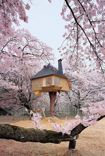 1671583-slide-va-tree-houses-02
